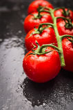 Wet tomatoes branch on black slate background Royalty Free Stock Photography