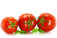 Wet tomatoes with greenery Stock Photography