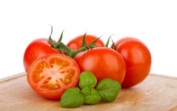 Wet tomatoes on a vine with fresh basil Stock Image