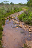 Wet trail. Stock Photography