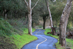 Wet Trail. A winding trail after a rainfall Royalty Free Stock Image