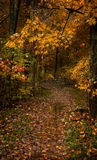 Wet Trail. Appalachian Trail spur on wet autumn day Stock Photo