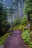 Wet Trail in Foggy Forest. Climbing up to Avalanche Lake Royalty Free Stock Photo