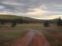 Wet trail. Forest trail in New Mexico after rainfall Stock Photo
