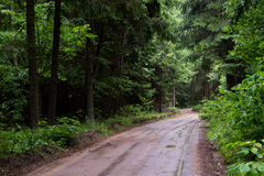Wet trail through forest. Rainy day for a hiking Stock Photography