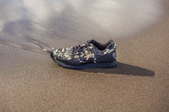 Wet trainer with seashells on the sandy beach Royalty Free Stock Photography