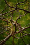 Wet tree branches. After summer rain Royalty Free Stock Photos