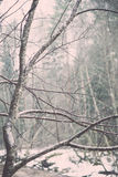 Wet tree branches in winter forest - vintage retro Royalty Free Stock Image