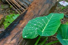 Wet tree log with green leaf Royalty Free Stock Photos