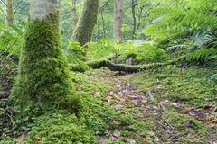 Wet tree trunk and green moss in forest close-up Stock Image