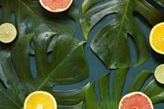 Wet Tropical leaves summer concept frame with citrus fruits on the wooden dark background. Top view stock photos
