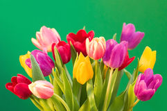 Wet tulips Royalty Free Stock Photo