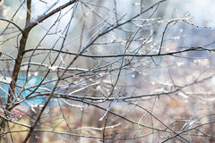 Wet twigs of bare tree with raindrops in garden. Wet twigs of bare tree with raindrops in country garden after spring rain Stock Photo