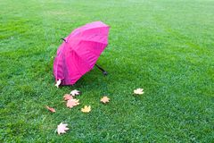 A wet umbrella and fallen leaves lie on the grass. Royalty Free Stock Images