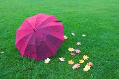 A wet umbrella and fallen leaves lie on the grass. Stock Photo