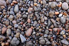 Wet volcanic pebbles Royalty Free Stock Photography