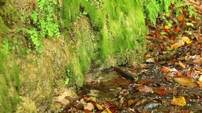 Wet wall and ground with dry leaves and little puddle. A wall of a mountain with wet vegetation, dry leaves lying on the ground and little puddle with dripping stock footage