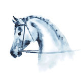 Wet watercolor horse head with equestrian sport bridle. Royalty Free Stock Photography