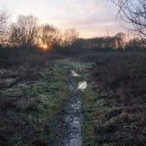 Wet waterlogged country muddy path trail walkway sunset silhouet. Te trees; essex; england; uk Stock Photo