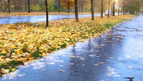 Wet weather autumnal alley with yellow red foliage and cold Rain Stock Images