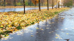 Wet weather autumnal alley with yellow red foliage and cold Rain Stock Photos