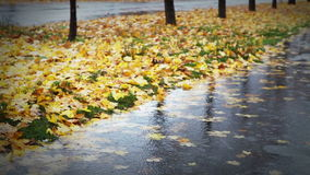Wet weather autumnal alley with yellow red foliage and cold Rain Stock Image