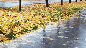 Wet weather autumnal alley with yellow red foliage and cold Rain stock video