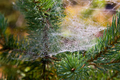 Wet web Stock Photos