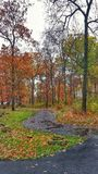 Wet Winding path in Autumn Royalty Free Stock Image