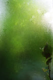 Wet window with the leaf Royalty Free Stock Photo
