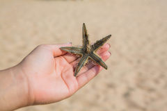 Wet woman hand holding red five point starfish. Wet woman hand holding red five point starfish above the sand beach Royalty Free Stock Photos