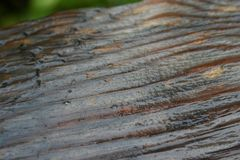 Wet Wood Fence Stock Photography