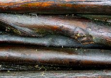Wet wood logs Royalty Free Stock Photos