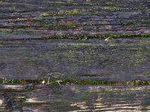 Wet Wood Texture Stock Images