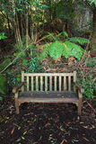 Wet wooden bench in rain forest Royalty Free Stock Photography