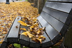 Wet wooden bench Royalty Free Stock Image