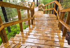Wet wooden stairway in the forest Royalty Free Stock Photo