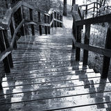 Wet wooden stairway in the forest Stock Images