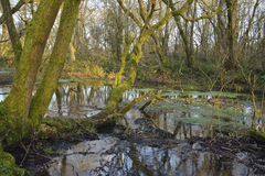 Wet Woodland, Charterhouse Royalty Free Stock Image