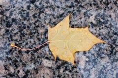 Wet yellow autumn leaf. On marble sidewalk Stock Photos