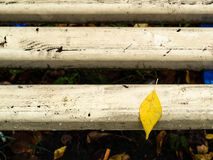 Wet yellow fallel leaf on wooden bench in park royalty free stock photo