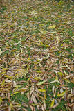 Wet yellow leaf. On the ground Royalty Free Stock Photos