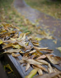Wet yellow leaf on the road. In the fall Royalty Free Stock Image