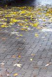 Wet yellow leaves on sidewalk after rain Royalty Free Stock Photos