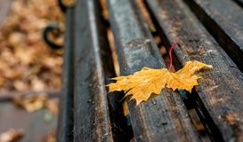 Wet yellow maple leaf on a bench in the park. A rainy autumn day. Creates a sad mood stock photo