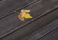 Wet yellow maple leaf on wood stair. Yellow maple leaf on wood stair in fall season Stock Photo