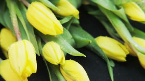 Wet Yellow Tulips Falling Down. Black background. Extreme close-up. Shot on RED Epic stock footage