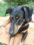 Wetdog Willi Foto de archivo