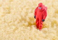 Wetenschapper bacterieel controleren op het schoonmakende stootkussen royalty-vrije stock afbeelding