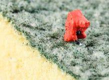 Wetenschapper bacterieel controleren op het schoonmakende stootkussen stock afbeelding